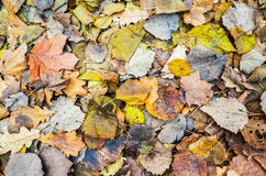 Colorful autumnal leaves lay on ground Stock Image
