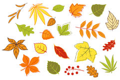 Colorful autumnal leaves and plants. Set isolated on white background for seasonal design Stock Photos