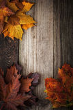 Colorful autumnal maple leaves on the wooden table vertical Stock Photo