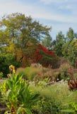 Colorful autumnal park Stock Photos