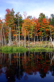 Colorful Autumnal Scene. This is a colorful autumnal scene in Quebec, Canada Royalty Free Stock Photography