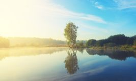 Beautiful autumn foggy landscape with trees growing on the bank of small pond. stock image