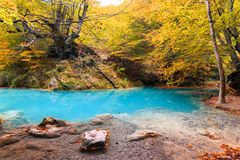 Colorful autumn landscape at urederra source, Spain. Colorful autumnal scene at clear natural spring of urederra Stock Photo