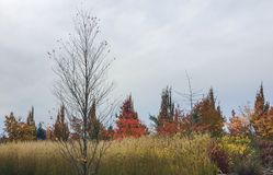 Colorful Autumnal scene. Colorful trees in the fall with grasses and sky Stock Photos