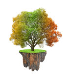 Colorful autumnal tree Stock Photography