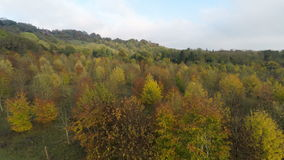 Colorful Autumnal Trees. Aerial footage ascending from the ground looking over the trees stock video