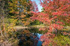 Colorful autumnal trees around a pond on a sunny day