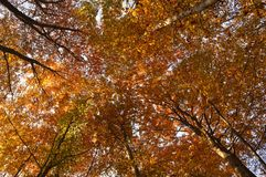 Colorful autumnal trees Stock Image