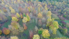 Colorful Autumnal Trees. 4K Aerial footage traveling over colorful autumnal trees stock video footage