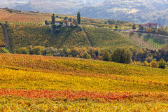 Colorful autumnal vineyard of Piedmont, Italy. Stock Image