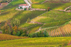 Colorful autumnal vineyards. Royalty Free Stock Photos