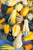 Colorful background of assorted ornamental gourds. Stock Photo