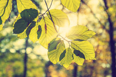 Colorful background of autumn leaf Stock Images
