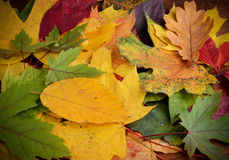 Colorful background of autumn leaves Stock Photo