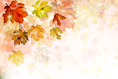 Colorful background with autumn leaves Royalty Free Stock Photography
