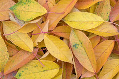 Colorful background of autumn leaves. Background of colorful fallen autumn leaves. Close-up Stock Photo