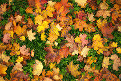 Colorful background of autumn leaves Royalty Free Stock Photos