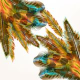 Colorful background with birds feathers. Vector illustration with colored vector feathers for your design Royalty Free Stock Images
