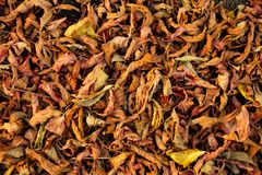 Colorful background of fallen autumn dried leaves stock photo