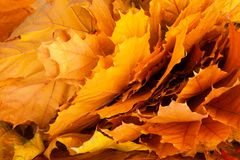 colorful background of fallen autumn leaves Royalty Free Stock Image