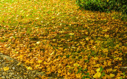 Colorful background of fallen autumn leaves. Stock Photos