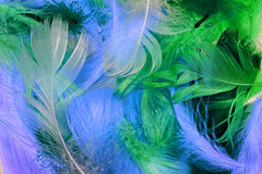 Colorful background of feather Royalty Free Stock Photos