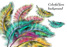 Colorful background with ferns Royalty Free Stock Photography