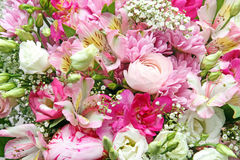 Colorful background of flowers Stock Photos