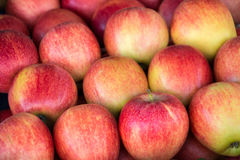Colorful background of gala apples. Stock Image