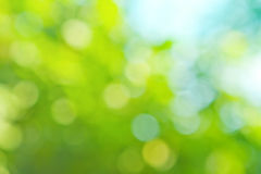 Colorful background in green colors. The bokeh effect Royalty Free Stock Images