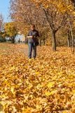 A colorful background image of autumn, fallen autumn leaves idea royalty free stock photography