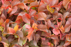 Colorful background of leaves Stock Image