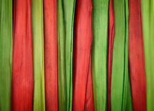 Colorful background made ​​of cane Royalty Free Stock Image