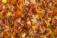Colorful background made of autumn leaves Royalty Free Stock Photo