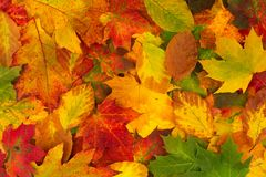 Colorful background made of autumn leaves Stock Photos