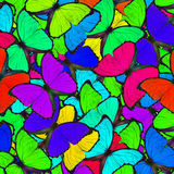 Colorful background made of Blue Morpho butterflies in the grace Stock Photography