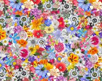 Colorful Background made with Mixed Flowers Stock Photo