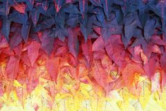 Colorful background of maple leaves Stock Images