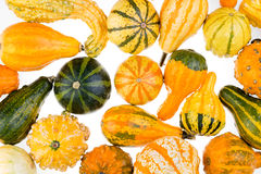 Colorful background of ornamental autumn gourds Royalty Free Stock Photo