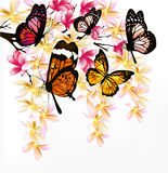 Colorful  background with realistic tropical butterflies a Royalty Free Stock Photography