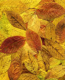 Colorful background of red autumn leaves. Royalty Free Stock Photo