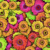 Colorful background with Zinnia flower. Seamless pattern Stock Images