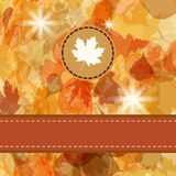 Colorful backround of fallen autumn leaves. EPS 8 Stock Photos