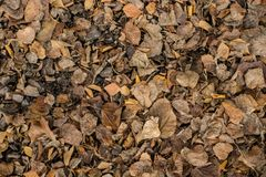 Colorful backround image of fallen autumn leaves stock image