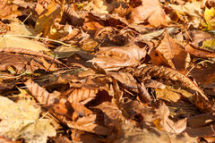 Colorful backround image of fallen autumn leaves Stock Photos