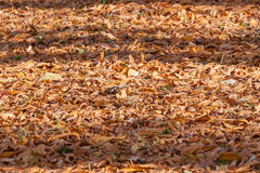 Colorful backround image of fallen autumn leaves Royalty Free Stock Photography