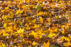 Colorful backround image of fallen autumn leaves Stock Photography