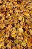 Dreamstime Фото Редакц. иллColorful backround image of fallen autumn leaves perfect for seasonal use. Colorful royalty free stock image