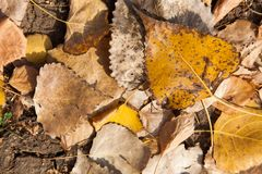 Colorful backround image of fallen autumn leaves perfect for seasonal use royalty free stock photography