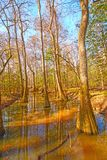 Colorful Backwater Forest Stock Photo